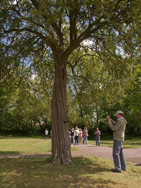 Tree Walk by Jackie Price