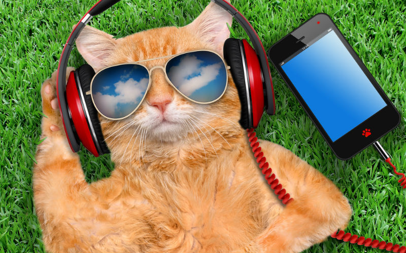 Cat with sunglasses listening to music