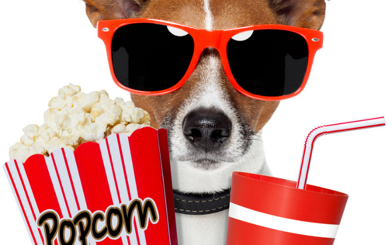 Dog with sunglasses, popcorn and drink