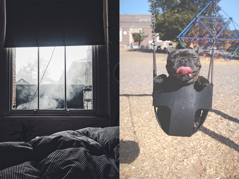 a two picture collage one picture with a grey window from the view of the bed. The other a picture of a dog in a swing with it's tongue out.