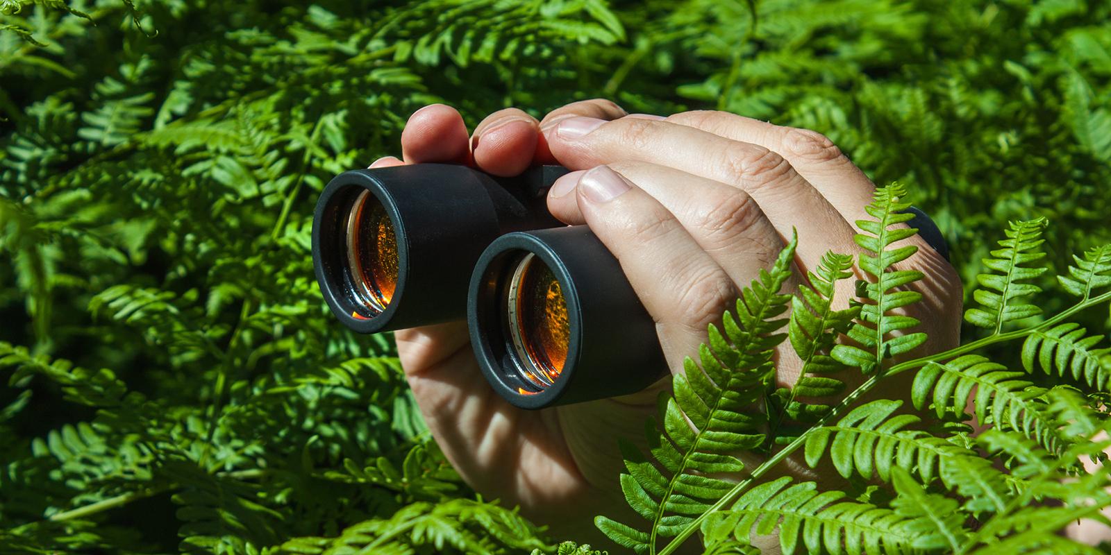 Image: Binoculars