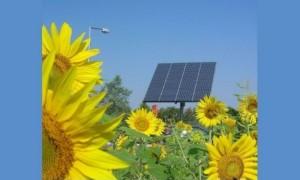1456841852-sunflowersolar